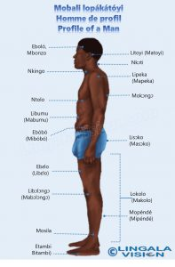 Male_side-lingala-watermark.jpg