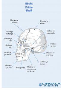 Skull-lingala-watermark.jpg